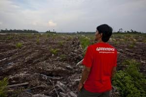 Palmšl-Greenpeace